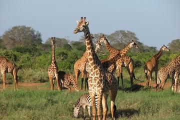 5days Tour to Amboseli Tsavo West and Tsavo East National Park