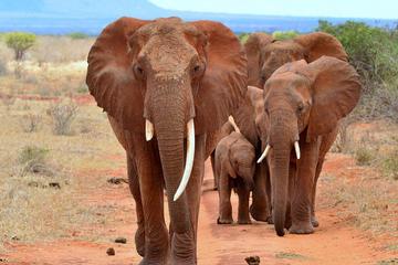 6-Day Camping Tour: Amboseli Lake, Nakuru and Masai Mara Wildlife Safari