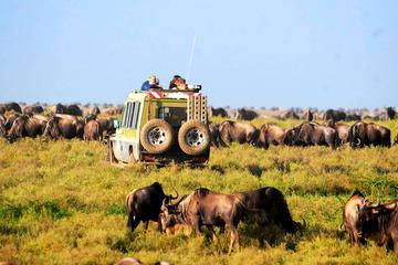6-Day Tanzania Camping Safari: Lake...