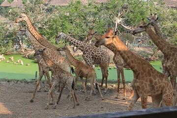 8days Discover Kenya Safari Amboseli  Naivasha Nakuru and Masai Mara
