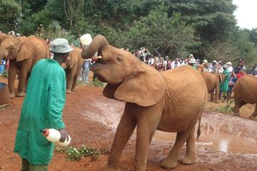 Elephant Orphanage and Giraffe Centre...