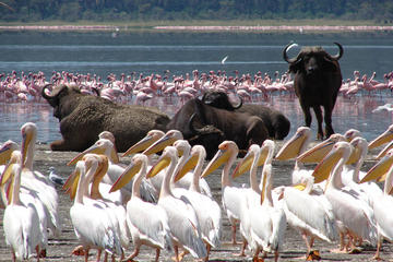Lake Nakuru Day Trip From Nairobi