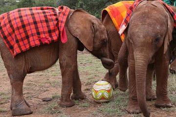Nairobi Highlights:Giraffe Centre, Elephant Orphanage, National Museum, and More