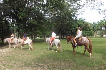Day Tour to Ixpanpajul Natural Park