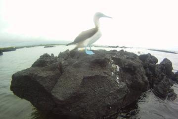Excursão de 15 dias no Peru e nas Ilhas Galápagos partindo de Lima