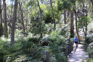 Self-Guided Waterfall Gully to Mount