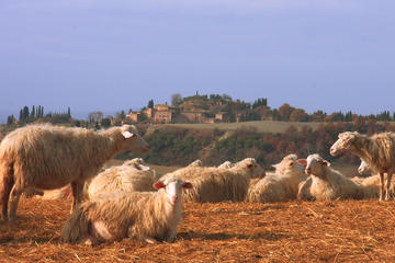 Pienza with Cheese and Wine Tasting Fullday from Florence
