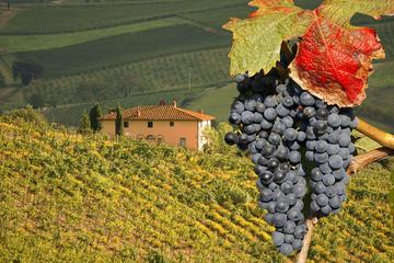 Private Full-Day Montalcino Truffle and Brunello Wine Tasting Tour from Rome