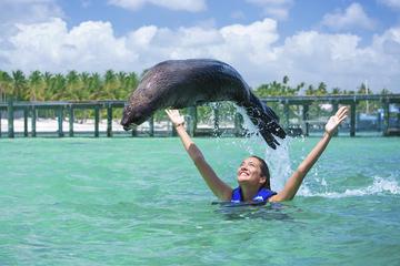 Encontro com focas em Punta Cana