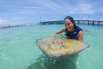Encontro com tubarões e arrais em Punta Cana