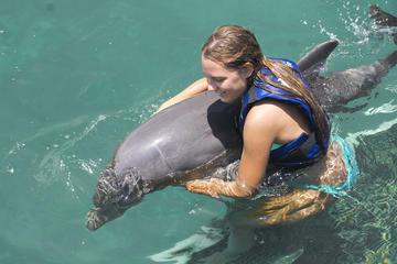 Encontro Divertido com Golfinhos em Punta Cana