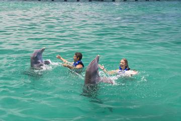 Extreme Swim em Punta Cana, além de encontro com tubarões, arraias e...