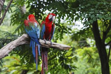 General Admission to Wild Life Park in Punta Cana