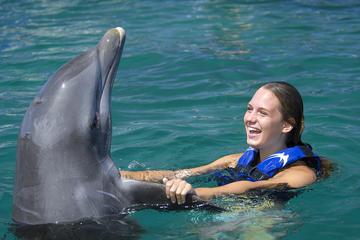 Nado com golfinhos no Dolphin Explorer de Punta Cana