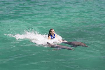 Nado com Golfinhos no pacote Excellence em Punta Cana