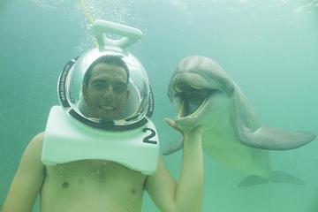 Nado com golfinhos subaquático em Punta Cana