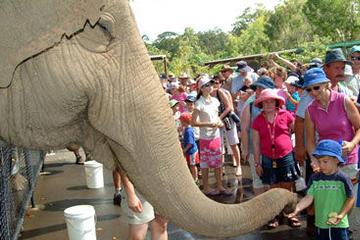 visite-a-bord-du-croc-express-coach-australia-zoo