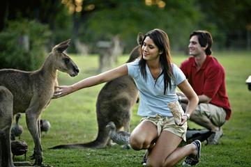 Het beste van Brisbane sightseeing-dagtour van een hele dag