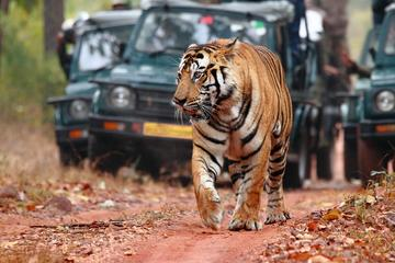 Explore Rajasthan with Tiger Safari at Ranthambore