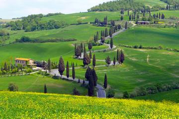 Pienza Val d'Orcia Montalcino Brunello Wine and Pecorino Cheese PRIVATE TOUR from Siena