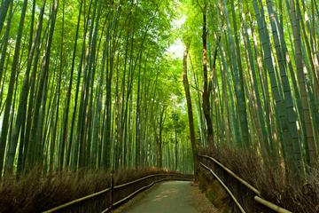 Excursão a pé matinal por Arashiyama e Sagano