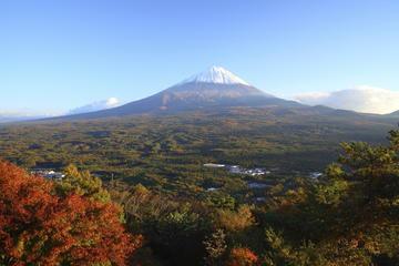 Gita di un giorno al monte Fuji e alla foresta Aokigahara da Tokyo