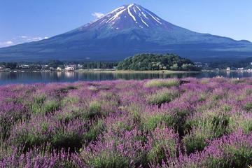 Gita giornaliera a Katsunuma e ai cinque laghi del monte Fuji da