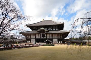 Heldags sightseeingtur i Kyoto og Nara, inkludert besøk i Nijo-slottet