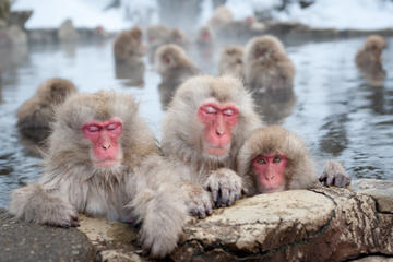 Jigokudani Monkey Park, Hot Spring...