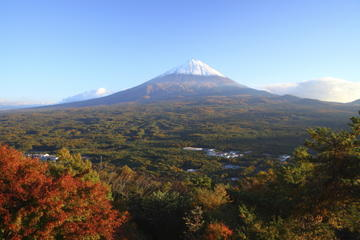 Mt Fuji and Aokigahara Forest Day...