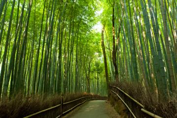 Recorrido a pie por la mañana de Arashiyama y Sagano