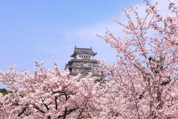 Tour a piedi di Osaka di un'intera giornata con crociera sul fiume