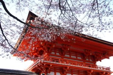 Visite dans l'après-midi du Sanctuaire de Heian, du Hall de...