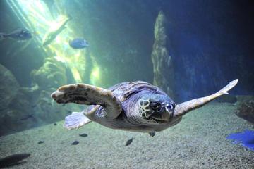 Cala Gonone Aquarium Admission Ticket
