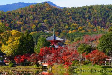 Autumn Leaves: Small-Group Arashiyama and Sagano Walking Tour