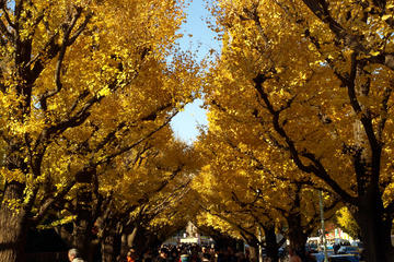 Autumn Leaves: Tokyo in Fall Full-Day Sightseeing