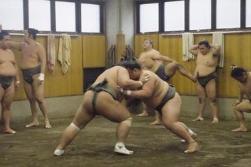 Visita a una práctica de sumo por la mañana