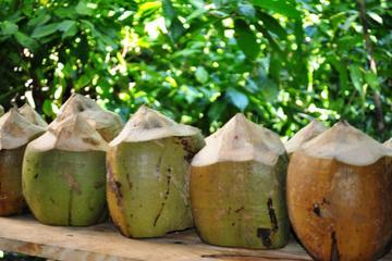 Culturele tour Dominicaanse Republiek met bezoek aan kokosfabriek