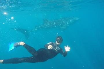 6-Day Ningaloo Reef Kayaking and Snorkeling with Whale Sharks from...