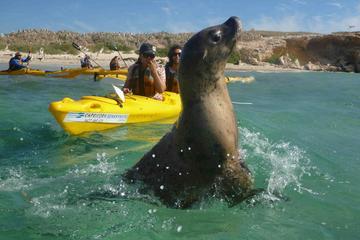 Penguin and Seal Island Kayak Tour