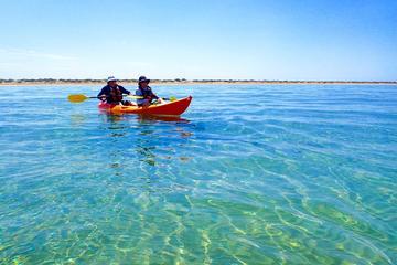 Turtle Tour - Half Day Sea Kayak...