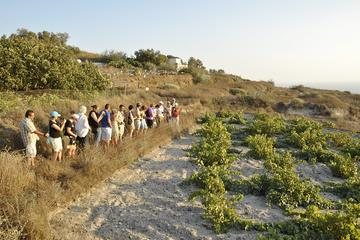 Santorini Small-Group Wine Tour with Professional Oenologist