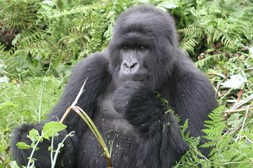 6-Day Primate Safari from Kampala
