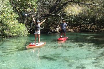 Day Trip Stand Up Paddle Board Eco Tour near Oldsmar, Florida