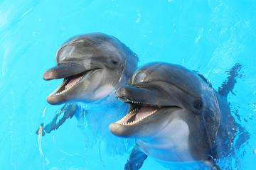 Dolphin and Seal show in Dubai Dolphinarium
