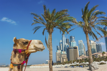 Dubai Super Saver: Sightseeingtour Dubai Stad en woestijnsafari