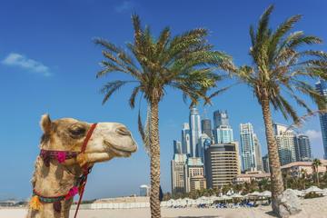 Dubai Superspar: sightseeingtur i staden och ökensafari