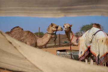 Excursão turística para a cidade de Al Ain - a Cidade Jardim