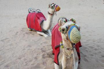Safári no deserto de Dubai em veículo...