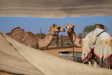 Tour panoramico della città di Al Ain